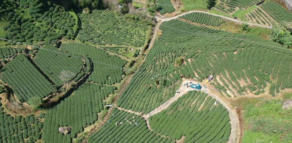 [ See Tea Fields from the Sky! ] MeiShan 36 Turns with Drone Part 2 梅山36彎空拍之二