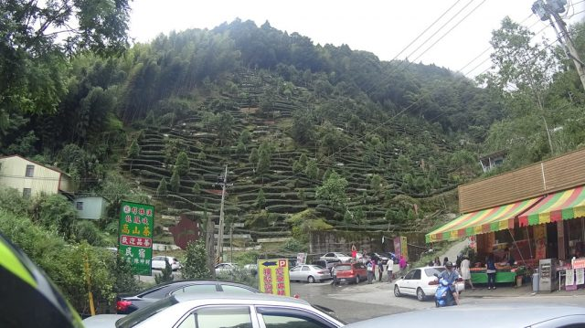 [ Nantou 55/95 ] Road to Taiwan High Mountain Tea 騎去杉林溪