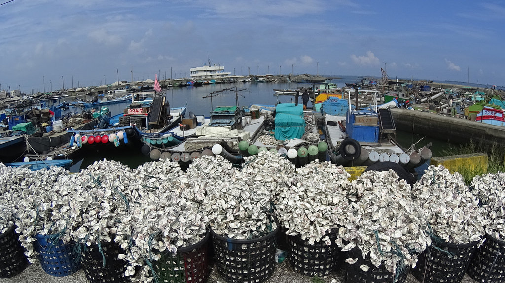 [ Oysters Everywhere! ] ChiaYi Land and Coastal Ride Part 1 嘉義老廟蚵港騎之一